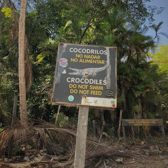 costa-rica-crocodiles