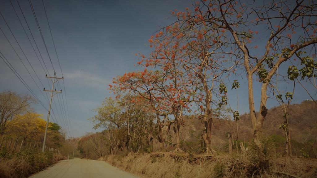 costa-rica-road-1